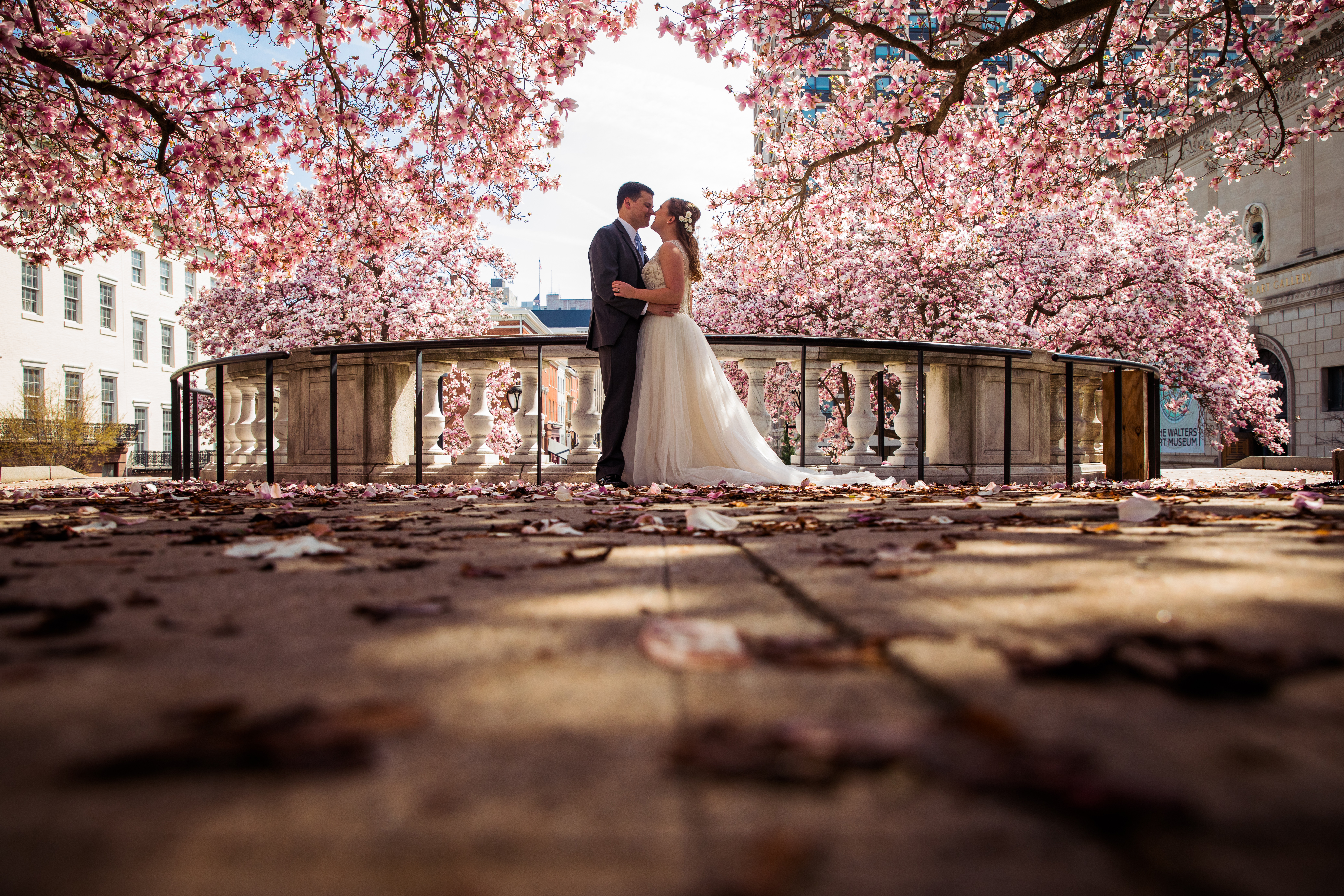bride and groom with the cherry blossoms